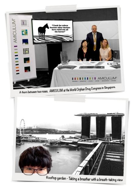 AMICULUM - Singapore